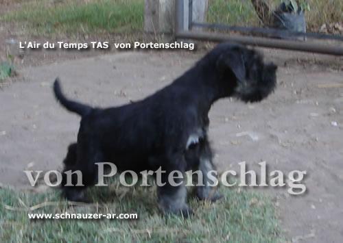 http://www.schnauzer-ar.com/vp/imagen/m008023.jpg